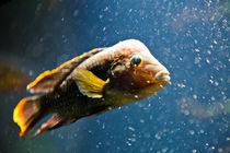 Finding Nemo von olgasart