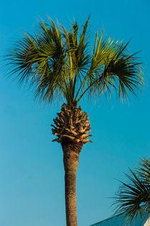 Single Palm Tree von digidreamgrafix