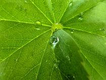 Regentropfen - Raindrops by Eva-Maria Di Bella
