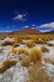 Multicoloured Desert by FireFlux Studios
