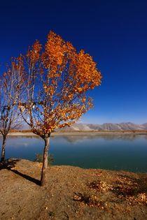 Tibetan Golden Tree von FireFlux Studios