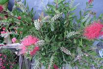 Frühlingszauber - Blumengrüße by Eva-Maria Di Bella