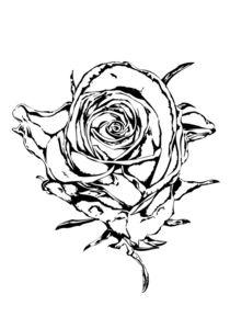 Rose flower drawing von Rafal Kulik