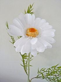 Weiße Gerbera von Eva-Maria Di Bella