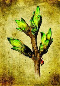 flower nature plant art design von Rafal Kulik