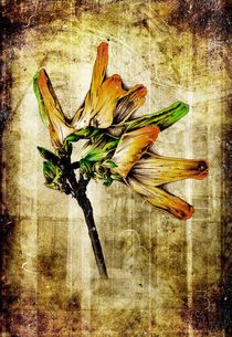 flower nature plant art design by Rafal Kulik