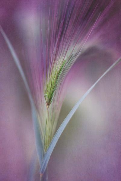 Barleytext