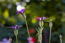 Garden lights by Ralph Patzel