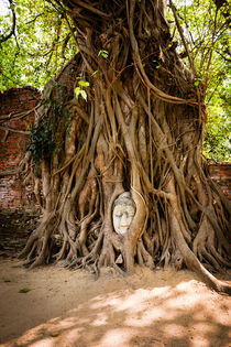 Famous Buddha head in Ayutthaya. by Tom Hanslien
