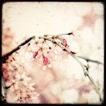 Sakura von Marc Loret
