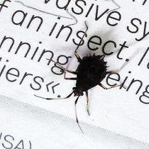 """"""" an insect"""" von Marina von Ketteler"""