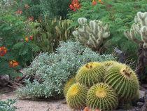 Cactus Garden #1 by Terry Kepner