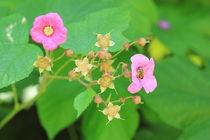 Rosa auf Grün von Silke Bicker