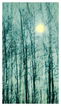 Winter Light by Linde Townsend