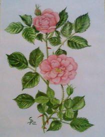 Wilde Rosen von Rena Rady