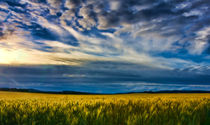 Golden-field-painted-2