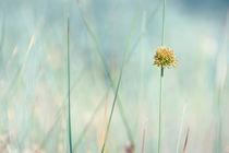 Frühlingswiese  von Barbelotta  1