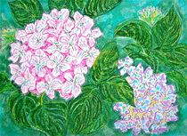 Pink Hydrangea von Christine Chase Cooper