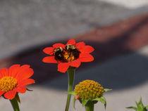 Bumble-bee-2-2634-6800x5100
