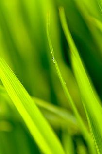 rice.one von Arno Kohlem