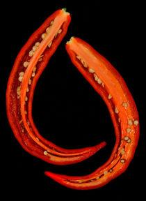 Red hot chili von Henrique Souto