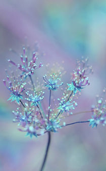 RAINBOW FLOWER von © Ivonne Wentzler