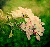 Fairyrose2