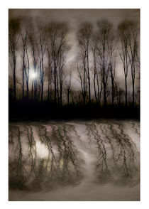 Willowreflections