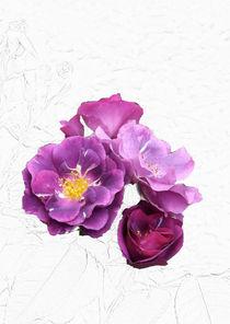 Violette Rosenblüten I by lorenzo-fp