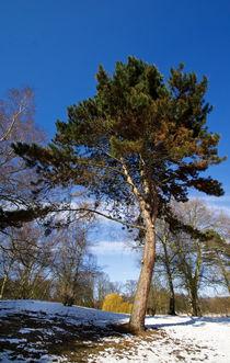 Baum von fotolos