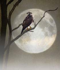 A HAWK IN THE MOONLIGHT von tomyork