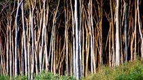 trees 1 - bäume 1 by mateart