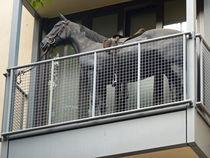 Kurios: Ein Pferd auf dem Balkon, Köln von Eva-Maria Di Bella