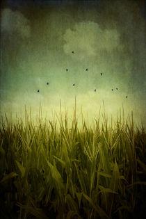 In the Field von Trish Mistric