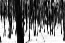 Winterwald  von Bastian  Kienitz