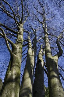 Bäume von fotolos