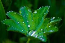 Nach dem Regen by Ursula Di Chito
