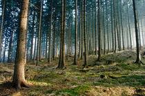 lichter Wald von Daniel Kühne