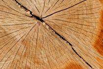 Holzstamm von Daniel Kühne