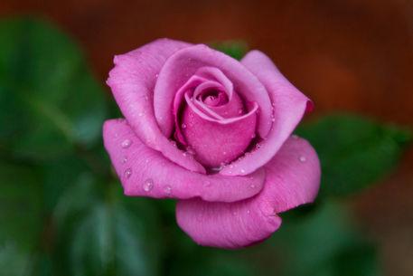 Lovely-in-lavender