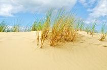 Helmet grass in the sand dunes in Nieuwpoort by 7horses