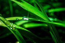 Water drop  by tapinambur