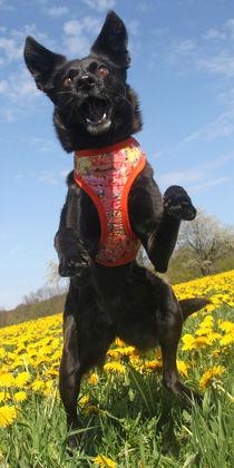 Hund in der Blumenwiese 001 von Monika Dobberstein