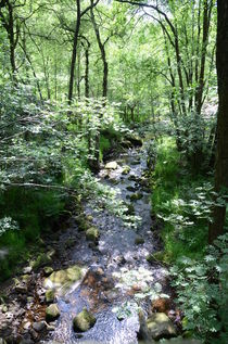 Forest Stream von Malcolm Snook