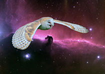 Barn Owl v. Horsehead Nebula. von Heather Goodwin