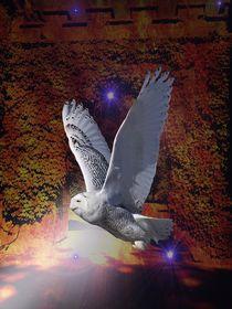 Flight of the Night Owl. von Heather Goodwin