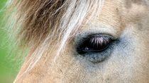 A horse's eye - Pferdeauge by mateart