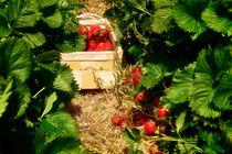rote Früchte  von Barbelotta  1