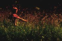 Natur erleben von Barbelotta  1