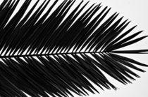 Palm Frond by Don Schwartz